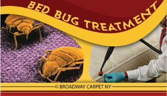 Bed Bug Treatment - New york city