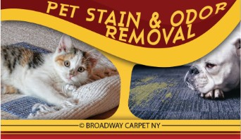 pet stain & odor removal - New york city